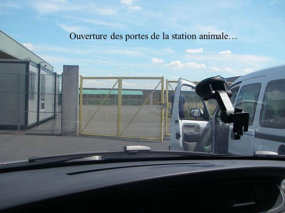 Ouverture des portes de la station animale…