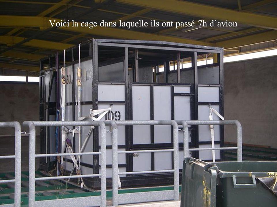 Voici la cage dans laquelle ils ont passé 7h d'avion