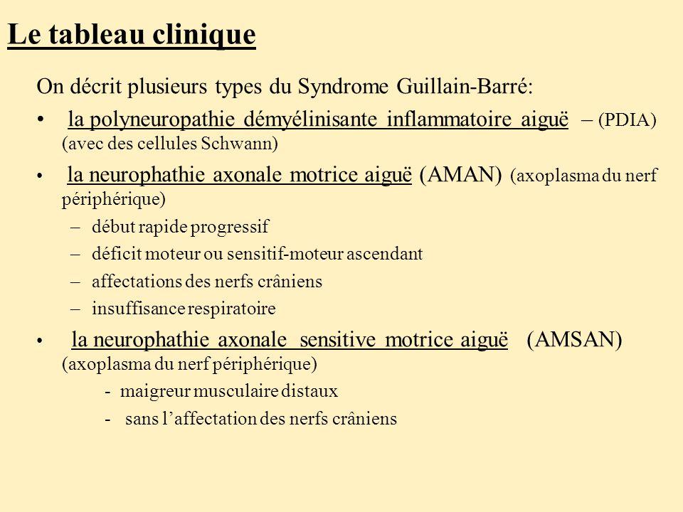 Le tableau clinique On décrit plusieurs types du Syndrome Guillain-Barré: la polyneuropathie démyélinisante inflammatoire aiguë – (PDIA) (avec des cellules Schwann) la neurophathie axonale motrice aiguë (AMAN) (axoplasma du nerf périphérique) –début rapide progressif –déficit moteur ou sensitif-moteur ascendant –affectations des nerfs crâniens –insuffisance respiratoire la neurophathie axonale sensitive motrice aiguë (AMSAN) (axoplasma du nerf périphérique) - maigreur musculaire distaux - sans l'affectation des nerfs crâniens