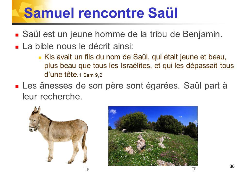 Samuel rencontre Saül Saül est un jeune homme de la tribu de Benjamin.