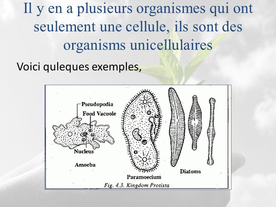 Il y en a plusieurs organismes qui ont seulement une cellule, ils sont des organisms unicellulaires Voici quleques exemples,