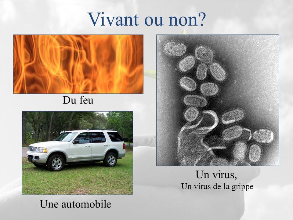 Vivant ou non? Du feu Un virus, Un virus de la grippe Une automobile