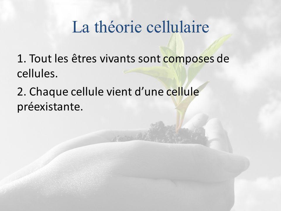 La théorie cellulaire 1. Tout les êtres vivants sont composes de cellules. 2. Chaque cellule vient d'une cellule préexistante.