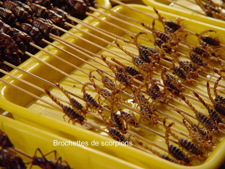 Scorpions noirs Vers à soie Grillons frits Cafards grillés