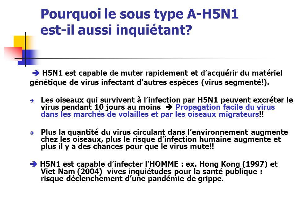 Pourquoi le sous type A-H5N1 est-il aussi inquiétant?  H5N1 est capable de muter rapidement et d'acquérir du matériel génétique de virus infectant d'