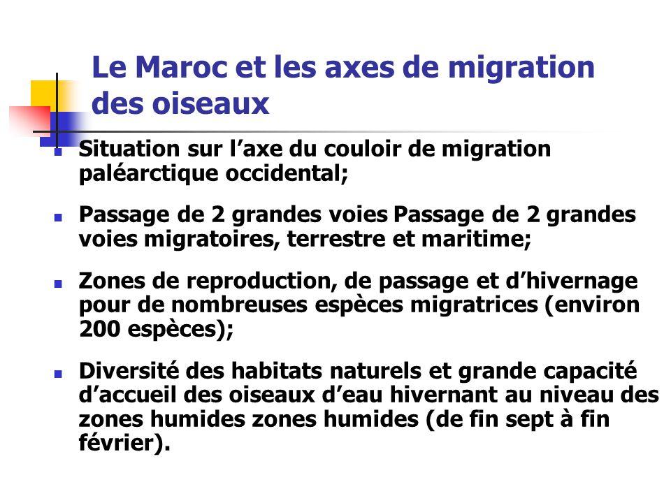 Le Maroc et les axes de migration des oiseaux Situation sur l'axe du couloir de migration paléarctique occidental; Passage de 2 grandes voies Passage