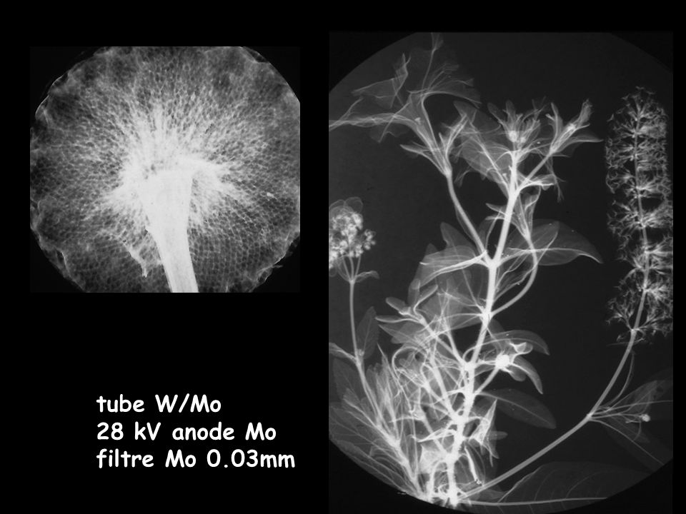 tube W/Mo 28 kV anode Mo filtre Mo 0.03mm