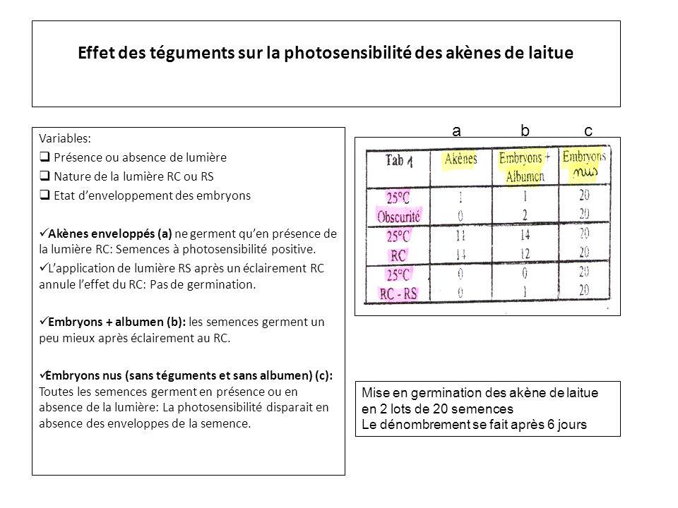 Effet des téguments sur la photosensibilité des akènes de laitue Variables:  Présence ou absence de lumière  Nature de la lumière RC ou RS  Etat d'enveloppement des embryons Akènes enveloppés (a) ne germent qu'en présence de la lumière RC: Semences à photosensibilité positive.