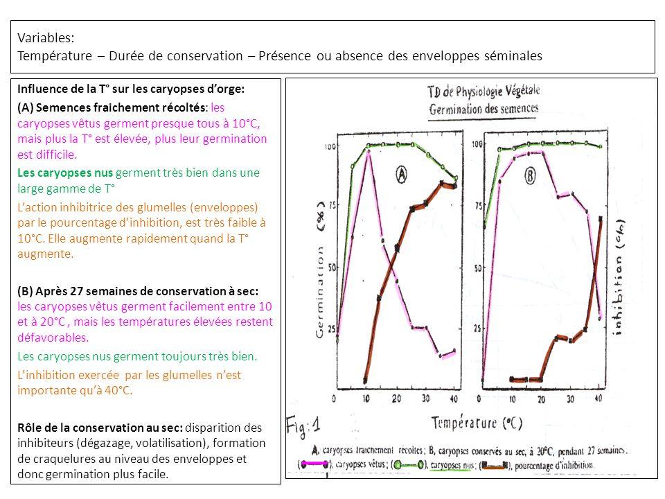 Variables: Température – Durée de conservation – Présence ou absence des enveloppes séminales Influence de la T° sur les caryopses d'orge: (A) Semences fraichement récoltés: les caryopses vêtus germent presque tous à 10°C, mais plus la T° est élevée, plus leur germination est difficile.