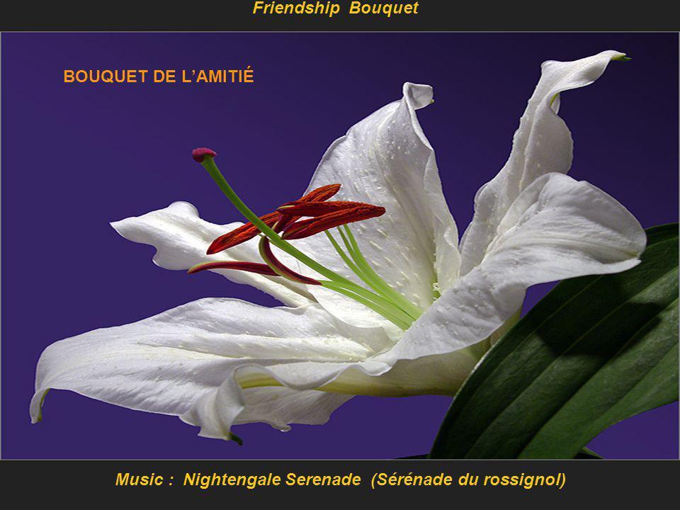 Music : Nightengale Serenade (Sérénade du rossignol) Friendship Bouquet BOUQUET DE L'AMITIÉ