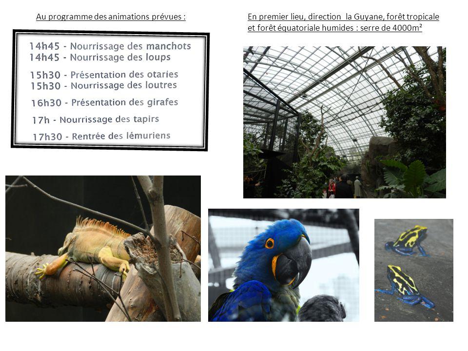 Au programme des animations prévues : En premier lieu, direction la Guyane, forêt tropicale et forêt équatoriale humides : serre de 4000m²