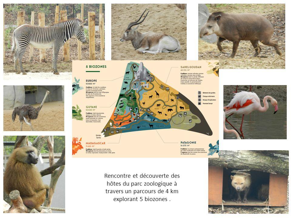 Rencontre et découverte des hôtes du parc zoologique à travers un parcours de 4 km explorant 5 biozones.
