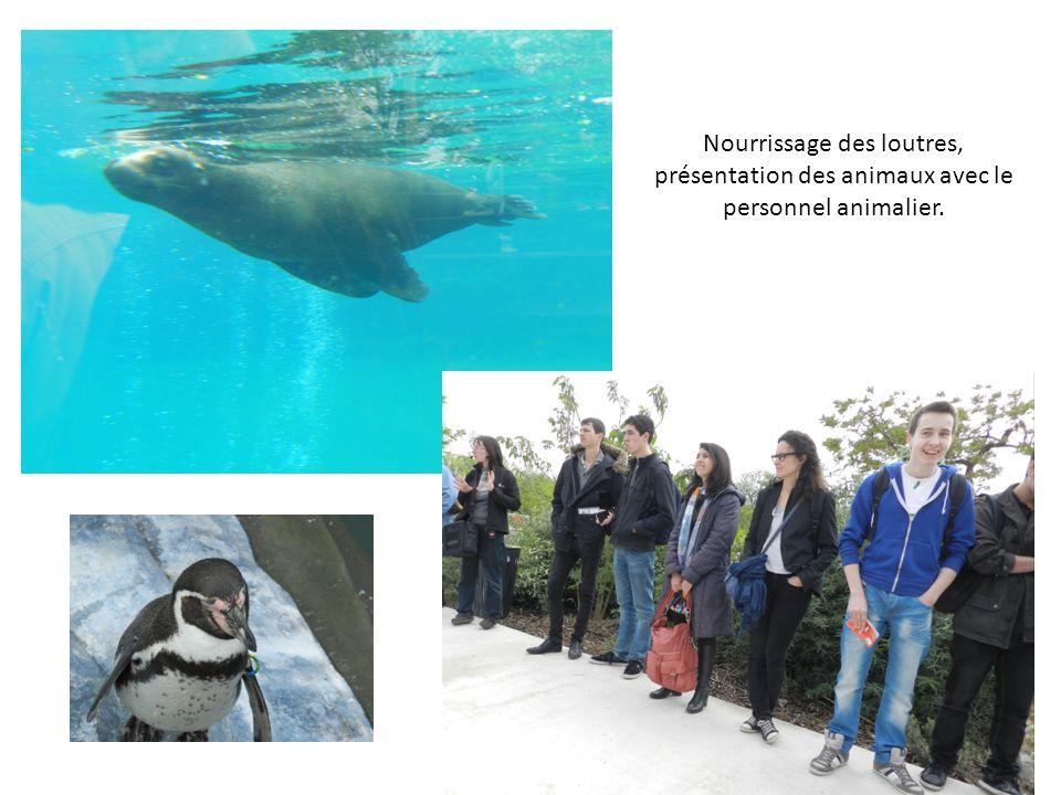 Nourrissage des loutres, présentation des animaux avec le personnel animalier.