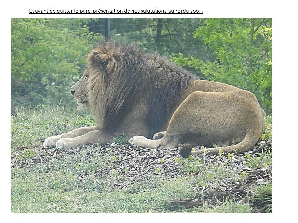 Et avant de quitter le parc, présentation de nos salutations au roi du zoo…