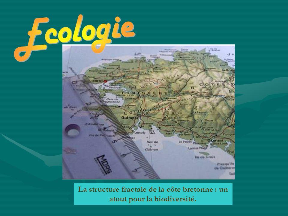 La structure fractale de la côte bretonne : un atout pour la biodiversité.