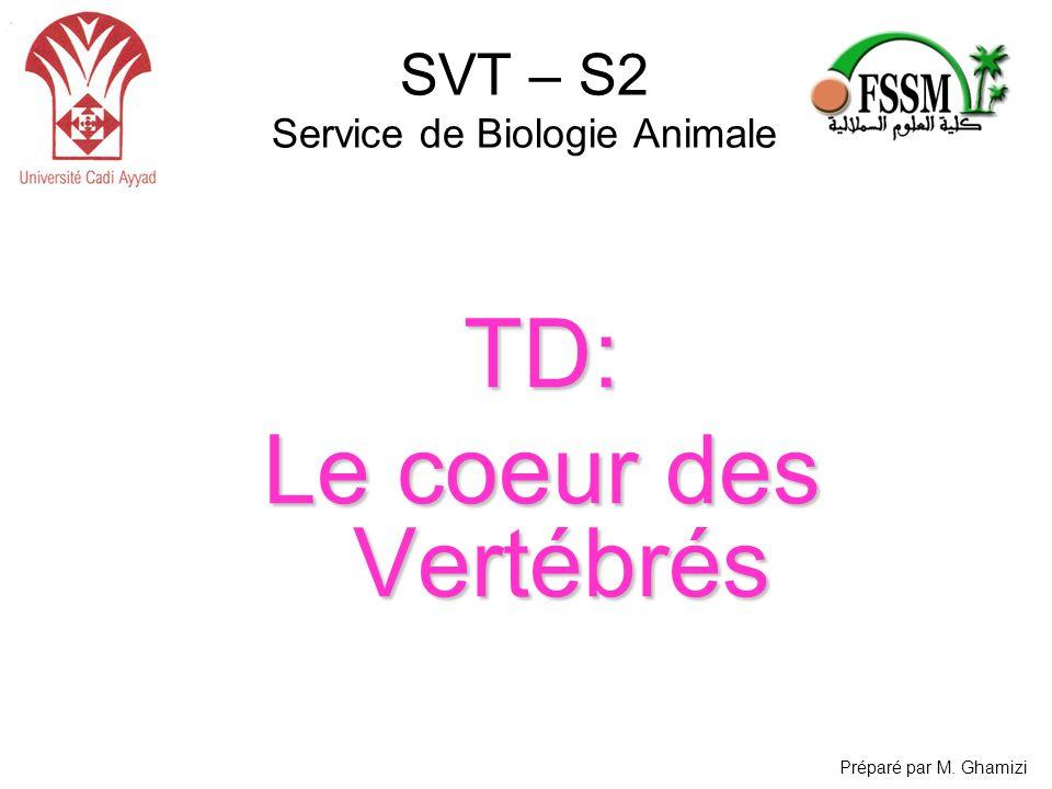 SVT – S2 Service de Biologie AnimaleTD: Le coeur des Vertébrés Préparé par M. Ghamizi