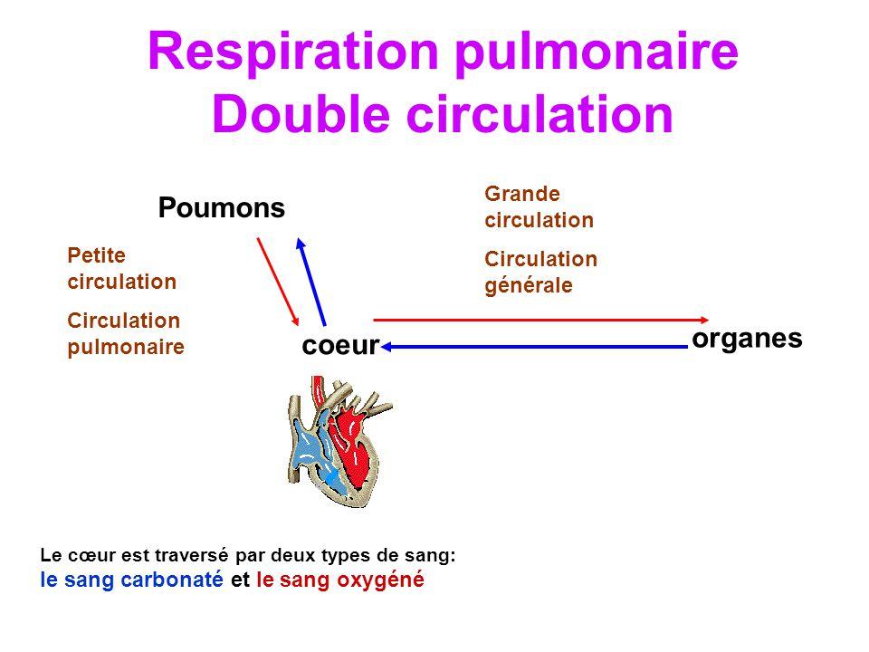 Respiration pulmonaire Double circulation Poumons coeur organes Le cœur est traversé par deux types de sang: le sang carbonaté et le sang oxygéné Petite circulation Circulation pulmonaire Grande circulation Circulation générale