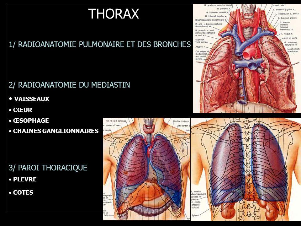 THORAX 1/ RADIOANATOMIE PULMONAIRE ET DES BRONCHES 2/ RADIOANATOMIE DU MEDIASTIN VAISSEAUX CŒUR ŒSOPHAGE CHAINES GANGLIONNAIRES 3/ PAROI THORACIQUE PLEVRE COTES