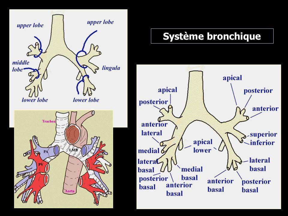 Œsophage cervical : de C6 à T1, 16 à 21 cm des AD Œsophage thoracique : T1 à T10, 21 à 37 cm des AD Œsophage abdominal : T10-11, 37 à 40 cm des AD Œsophage intra-thoracique : Tiers supérieur : de l orifice supérieur du thorax à la bifurcation trachéale, à 24 cm approximativement des incisives supérieures Tiers moyen : débutant à la hauteur de la bifurcation trachéale, de 24 à 32 cm approximativement des incisives supérieures Tiers inférieur : (incluant l oesophage abdominal), de 32 à 40 cm approximativement des incisives supérieures.