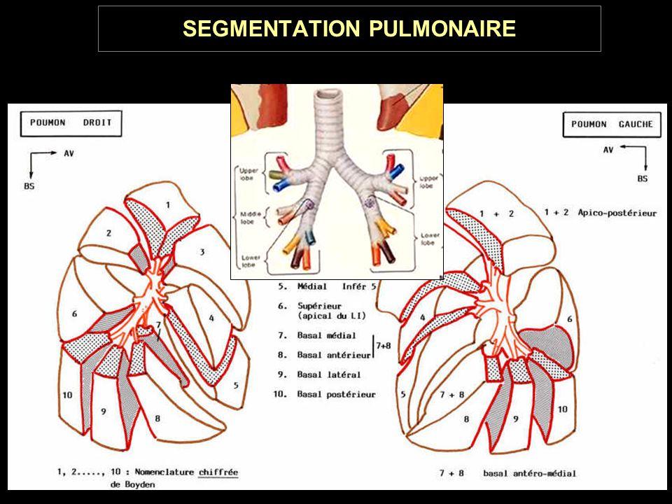 SEGMENTATION PULMONAIRE