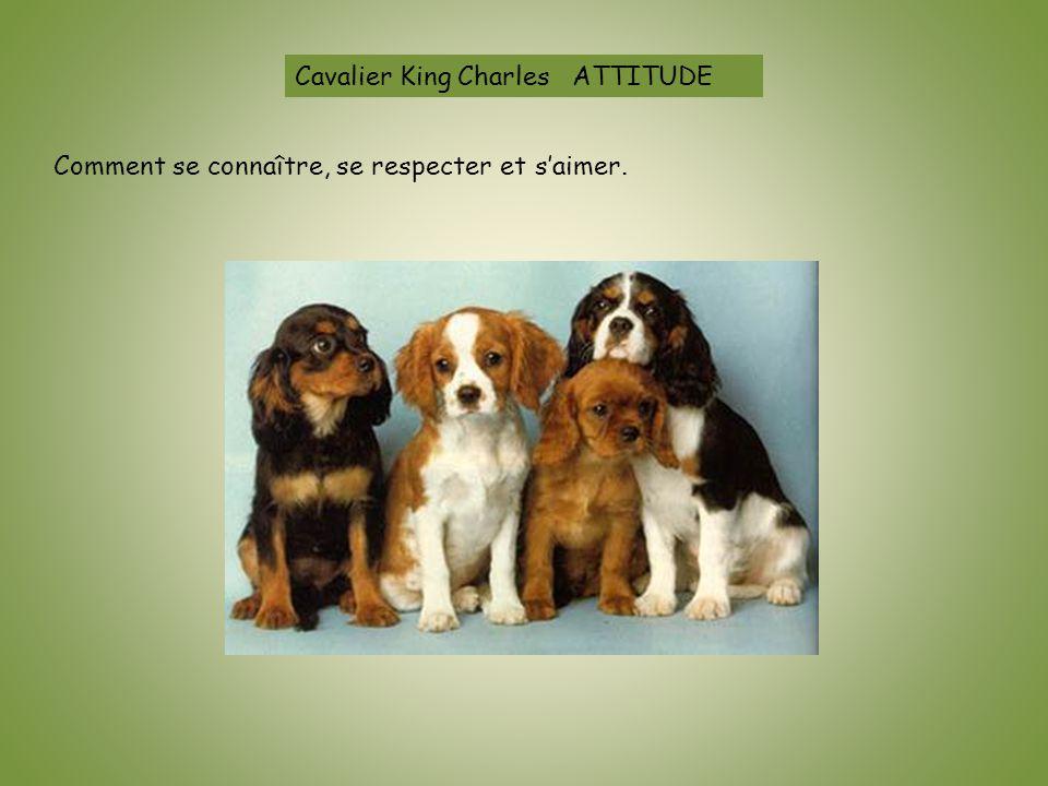 Cavalier King Charles ATTITUDE Comment se connaître, se respecter et s'aimer.