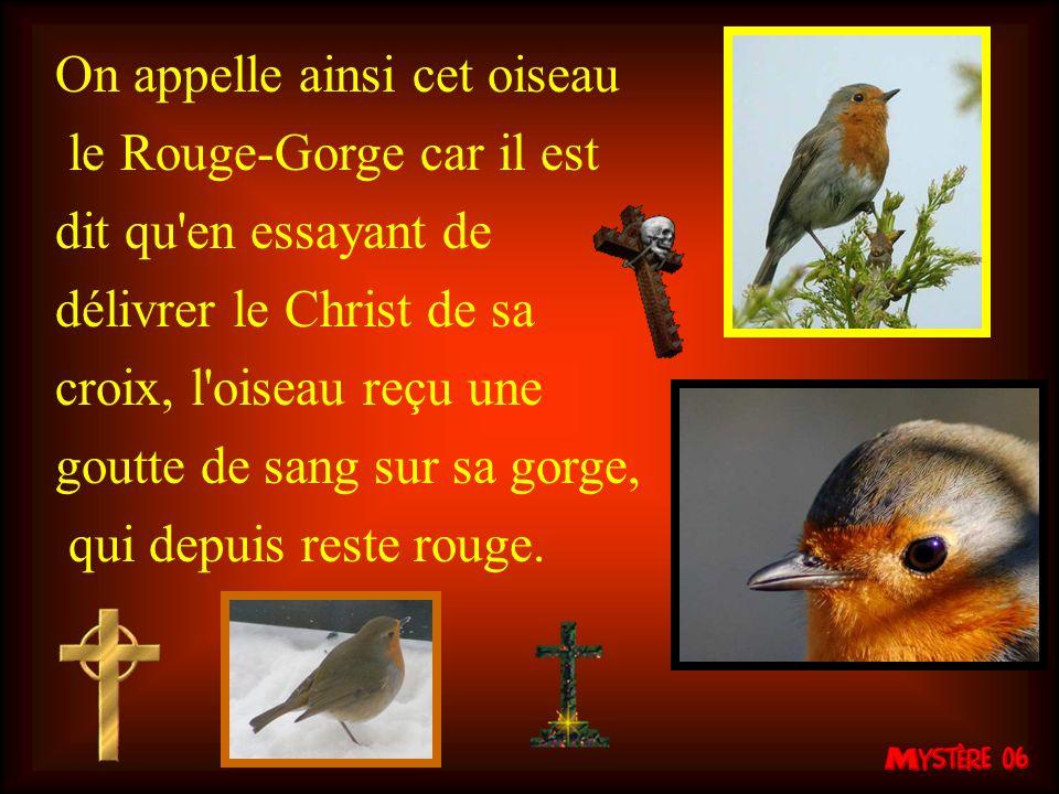 On appelle ainsi cet oiseau le Rouge-Gorge car il est dit qu en essayant de délivrer le Christ de sa croix, l oiseau reçu une goutte de sang sur sa gorge, qui depuis reste rouge.