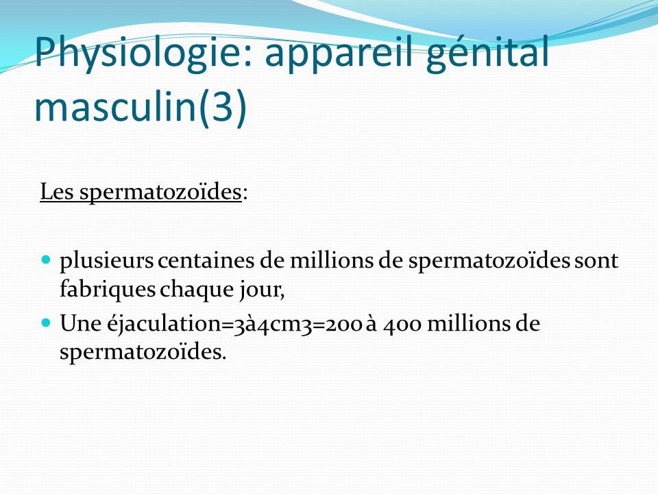 Physiologie: appareil génital masculin(3) Les spermatozoïdes: plusieurs centaines de millions de spermatozoïdes sont fabriques chaque jour, Une éjaculation=3à4cm3=200 à 400 millions de spermatozoïdes.