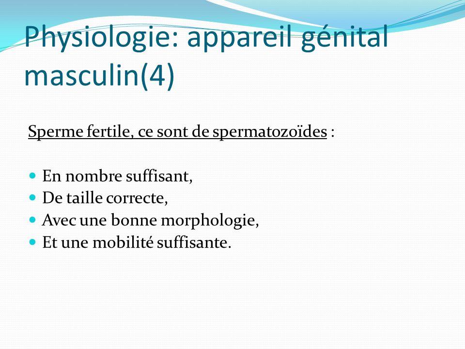Physiologie: appareil génital masculin(4) Sperme fertile, ce sont de spermatozoïdes : En nombre suffisant, De taille correcte, Avec une bonne morphologie, Et une mobilité suffisante.