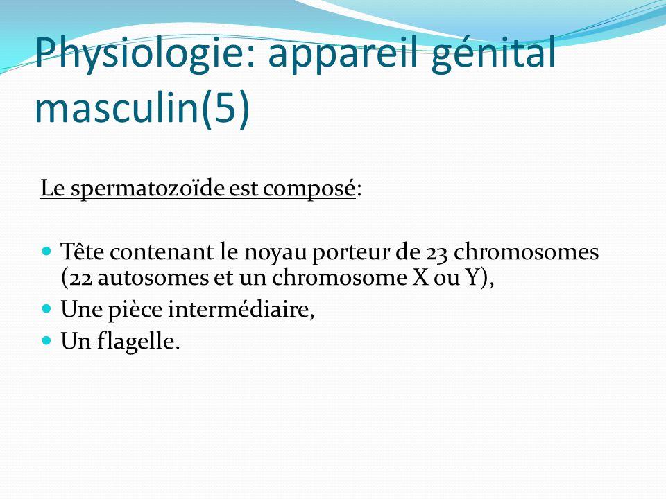 Physiologie: appareil génital masculin(5) Le spermatozoïde est composé: Tête contenant le noyau porteur de 23 chromosomes (22 autosomes et un chromosome X ou Y), Une pièce intermédiaire, Un flagelle.