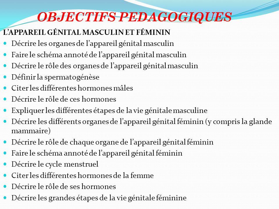 OBJECTIFS PEDAGOGIQUES L'APPAREIL GÉNITAL MASCULIN ET FÉMININ Décrire les organes de l'appareil génital masculin Faire le schéma annoté de l'appareil génital masculin Décrire le rôle des organes de l'appareil génital masculin Définir la spermatogénèse Citer les différentes hormones mâles Décrire le rôle de ces hormones Expliquer les différentes étapes de la vie génitale masculine Décrire les différents organes de l'appareil génital féminin (y compris la glande mammaire) Décrire le rôle de chaque organe de l'appareil génital féminin Faire le schéma annoté de l'appareil génital féminin Décrire le cycle menstruel Citer les différentes hormones de la femme Décrire le rôle de ses hormones Décrire les grandes étapes de la vie génitale féminine