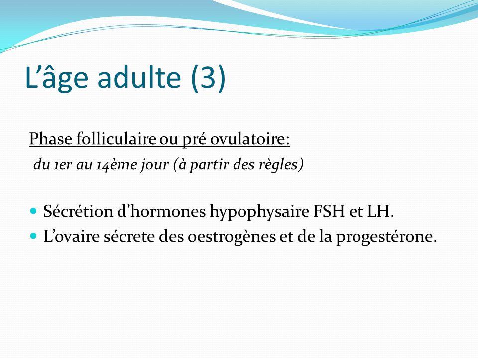 L'âge adulte (3) Phase folliculaire ou pré ovulatoire: du 1er au 14ème jour (à partir des règles) Sécrétion d'hormones hypophysaire FSH et LH.