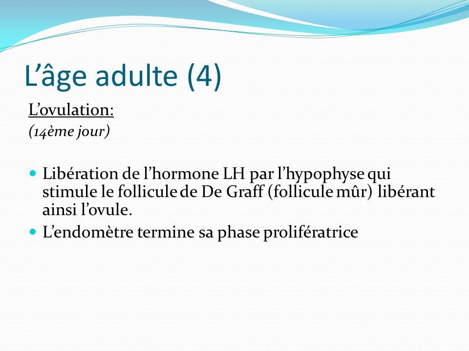 L'âge adulte (4) L'ovulation: (14ème jour) Libération de l'hormone LH par l'hypophyse qui stimule le follicule de De Graff (follicule mûr) libérant ainsi l'ovule.