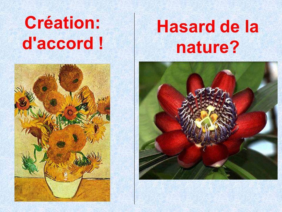 Création: d accord ! Hasard de la nature La terre