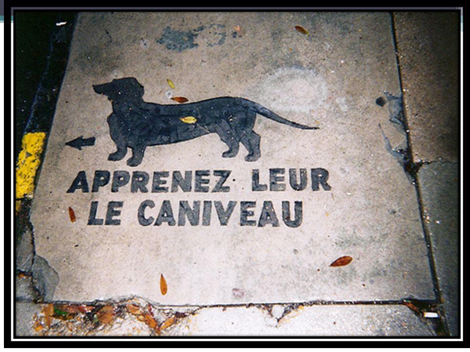 Les animaux domestiques des autres Olivier, Martinique: « Oui, j'ai un animaux à la maison, un chien.