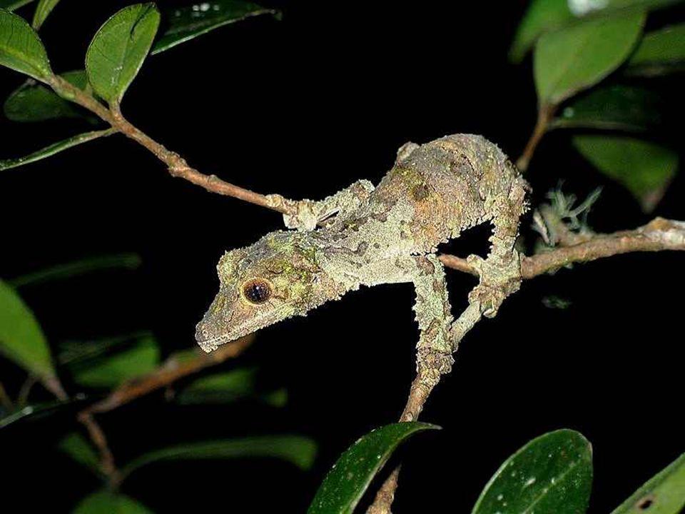 L'isolement biogéographique de Madagascar et la variété des climats et reliefs y ont favorisé le développement d'une faune et d'une flore uniques au m