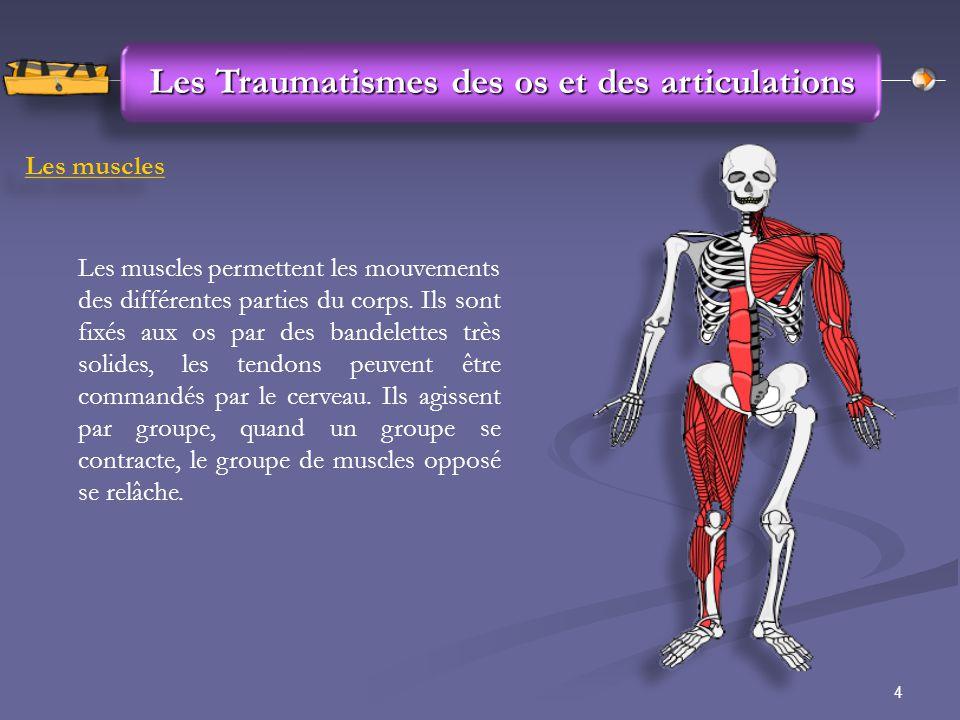4 Les Traumatismes des os et des articulations Les muscles Les muscles permettent les mouvements des différentes parties du corps. Ils sont fixés aux