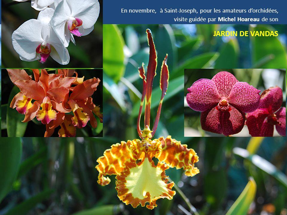 En novembre, à Saint-Joseph, pour les amateurs d'orchidées, visite guidée par Michel Hoareau de son JARDIN DE VANDAS