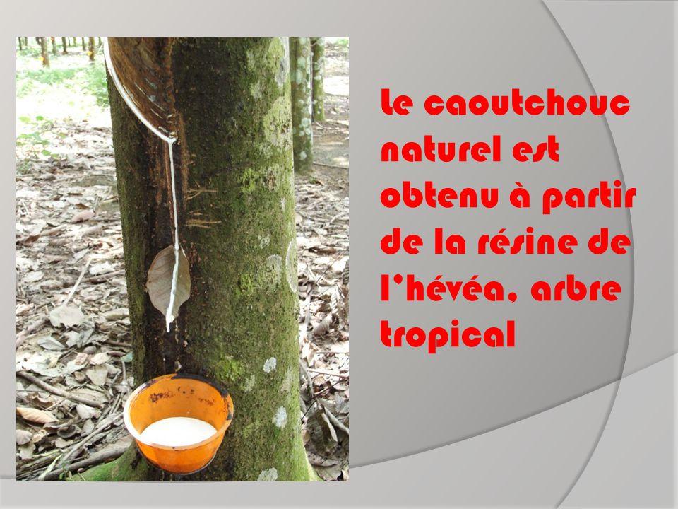 Le caoutchouc naturel est obtenu à partir de la résine de l'hévéa, arbre tropical