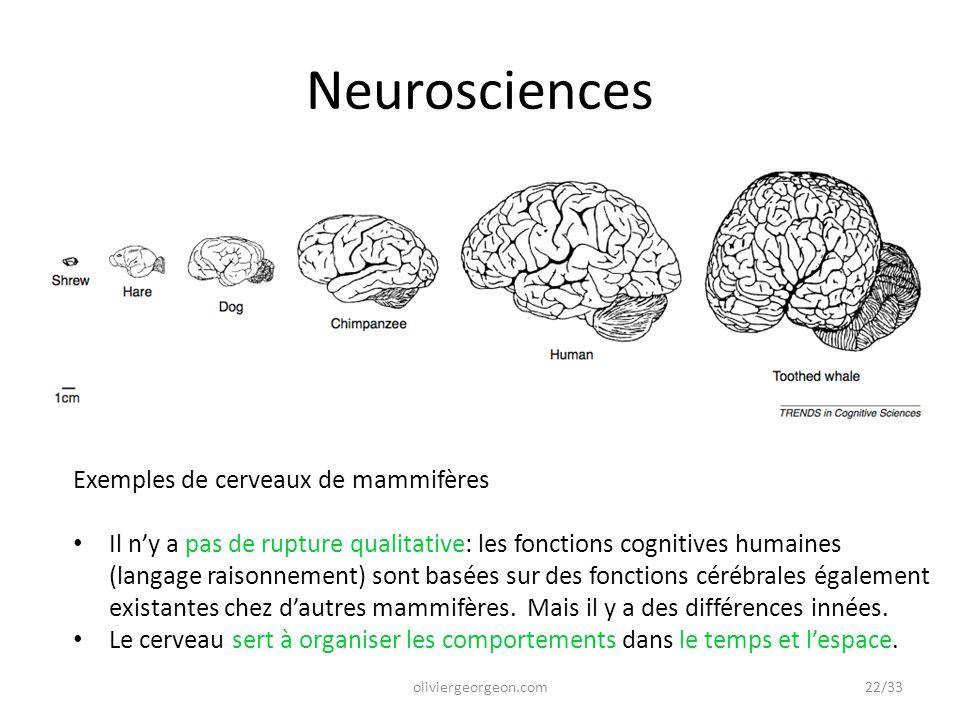 Neurosciences Exemples de cerveaux de mammifères Il n'y a pas de rupture qualitative: les fonctions cognitives humaines (langage raisonnement) sont ba