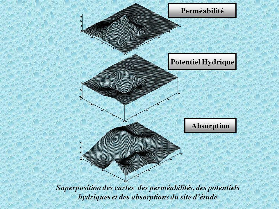 Superposition des cartes des perméabilités, des potentiels hydriques et des absorptions du site d'étude Perméabilité Potentiel Hydrique Absorption