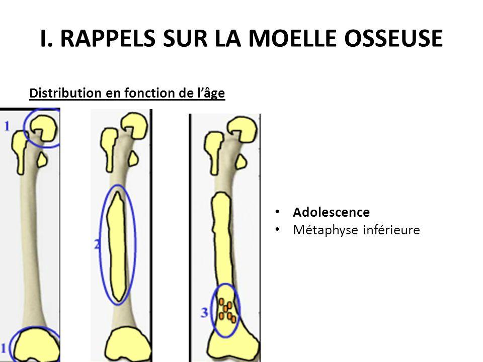 Distribution en fonction de l'âge Adolescence Métaphyse inférieure I. RAPPELS SUR LA MOELLE OSSEUSE