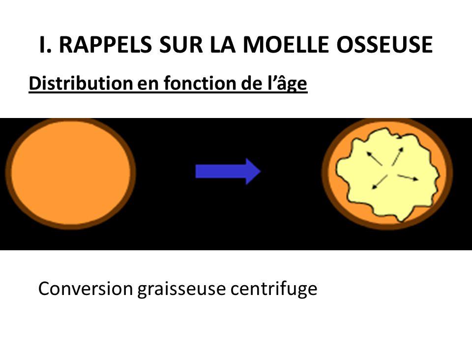 Conversion graisseuse centrifuge Distribution en fonction de l'âge I. RAPPELS SUR LA MOELLE OSSEUSE