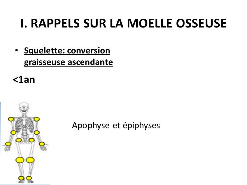 I. RAPPELS SUR LA MOELLE OSSEUSE Squelette: conversion graisseuse ascendante Apophyse et épiphyses <1an