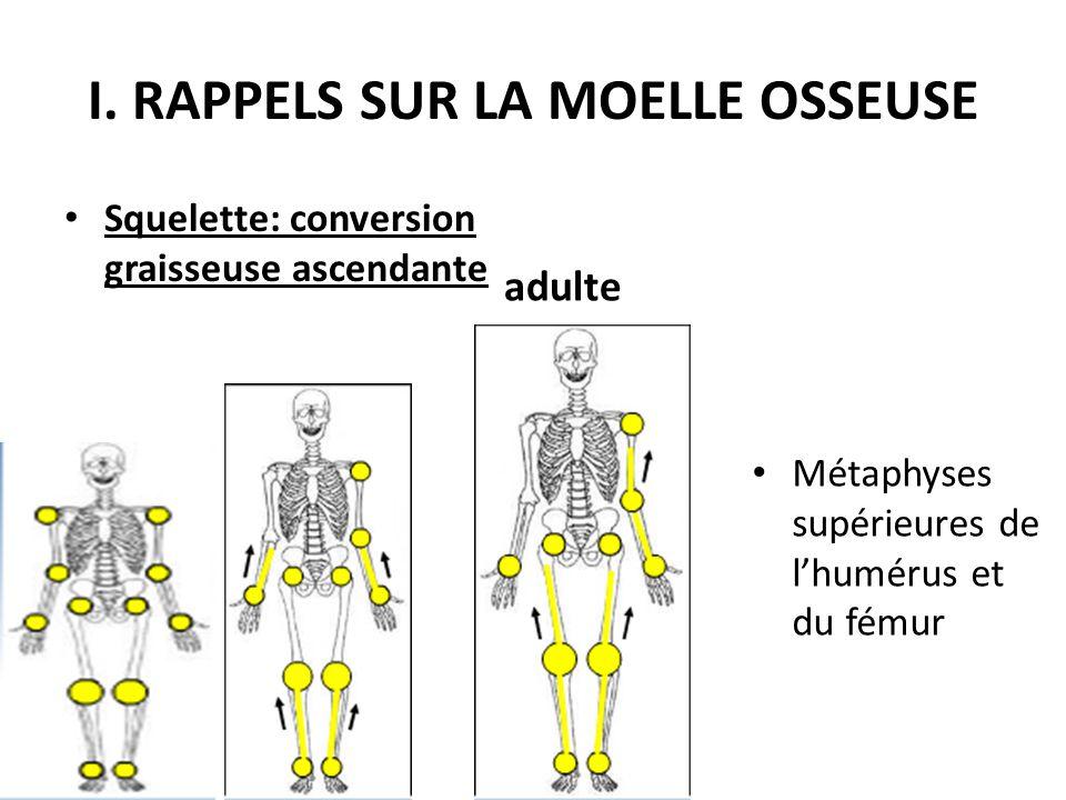 I. RAPPELS SUR LA MOELLE OSSEUSE Squelette: conversion graisseuse ascendante Métaphyses supérieures de l'humérus et du fémur adulte