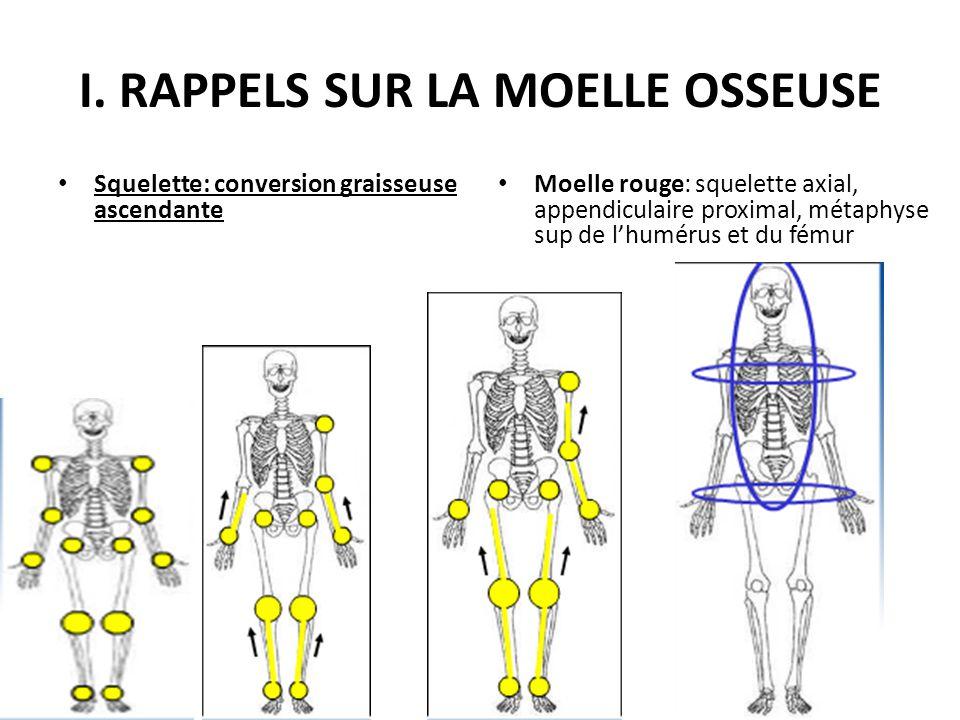 I. RAPPELS SUR LA MOELLE OSSEUSE Squelette: conversion graisseuse ascendante Moelle rouge: squelette axial, appendiculaire proximal, métaphyse sup de