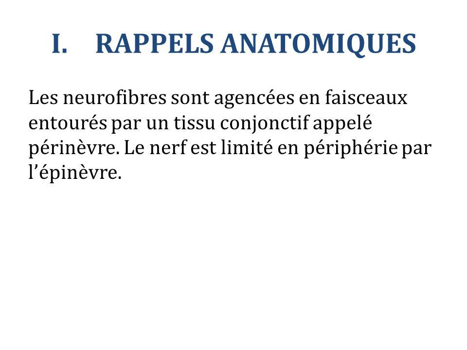I.RAPPELS ANATOMIQUES Les neurofibres sont agencées en faisceaux entourés par un tissu conjonctif appelé périnèvre. Le nerf est limité en périphérie p