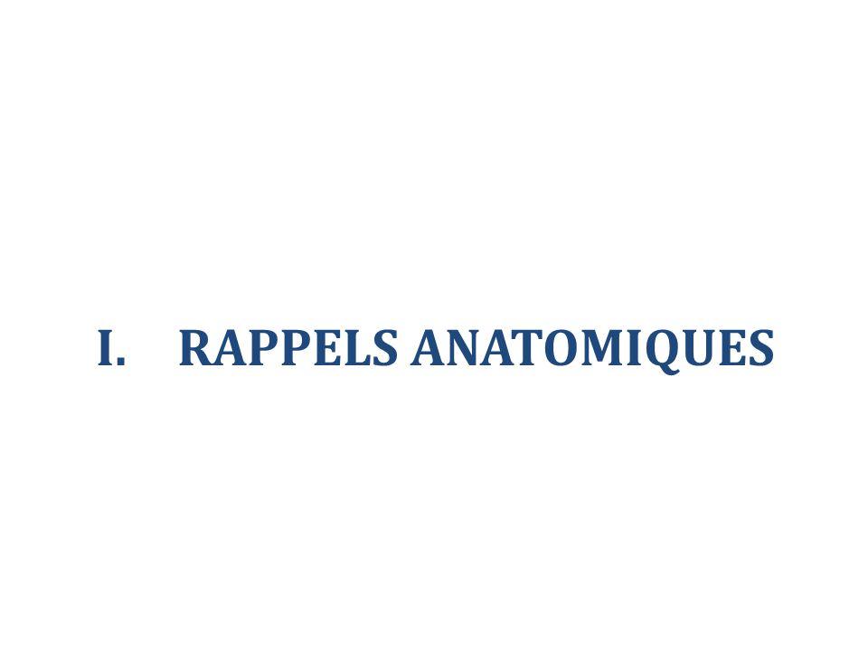 I.RAPPELS ANATOMIQUES