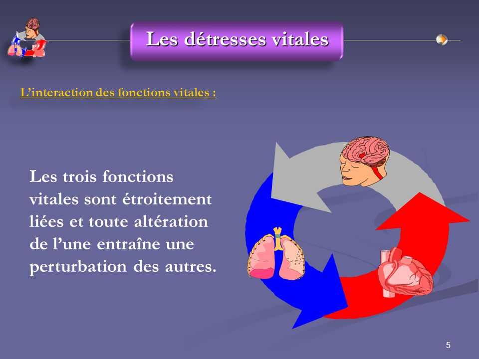 5 L'interaction des fonctions vitales : Les trois fonctions vitales sont étroitement liées et toute altération de l'une entraîne une perturbation des autres.