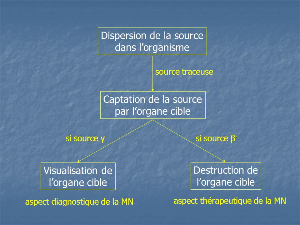 Dispersion de la source dans l'organisme Captation de la source par l'organe cible Visualisation de l'organe cible Destruction de l'organe cible sourc