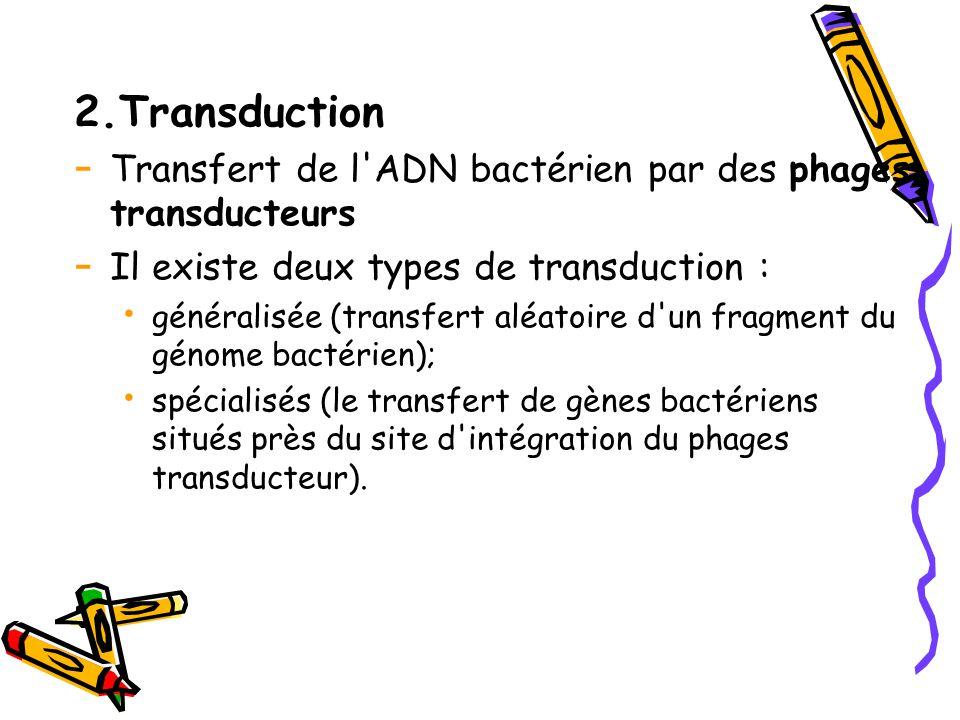 2.Transduction - Transfert de l ADN bactérien par des phages transducteurs - Il existe deux types de transduction : généralisée (transfert aléatoire d un fragment du génome bactérien); spécialisés (le transfert de gènes bactériens situés près du site d intégration du phages transducteur).